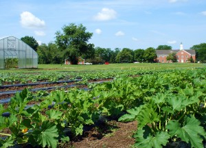 Seminary Hill Farm Offers Food Shares For Purchase Mtso